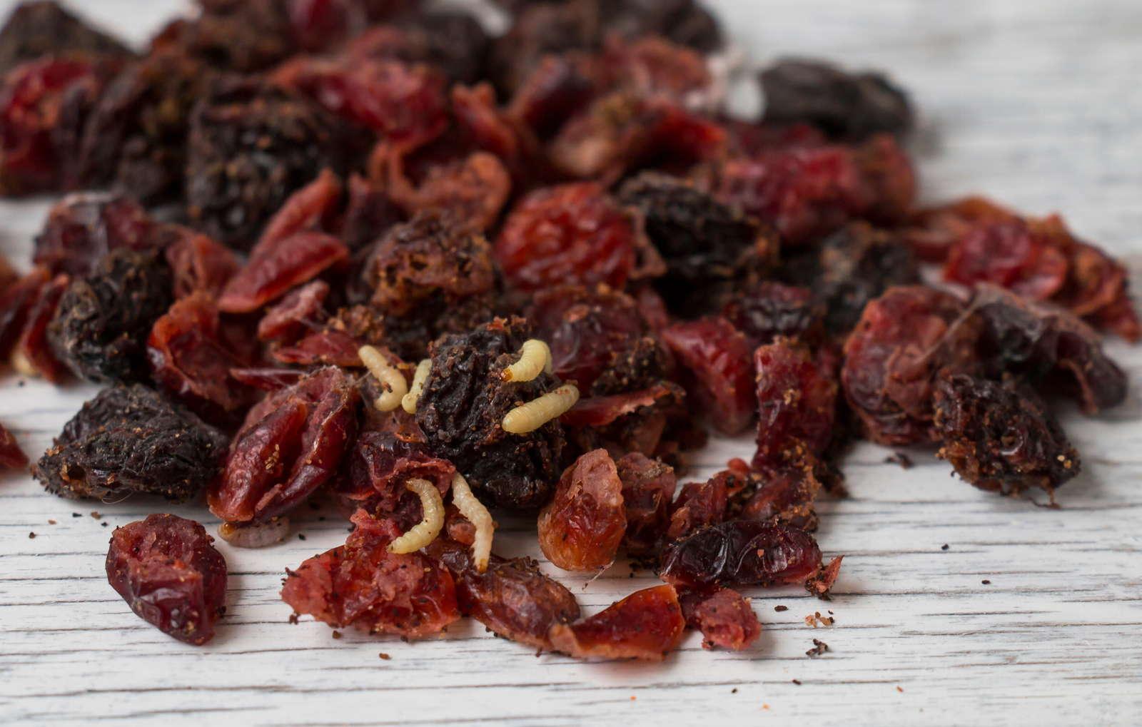 Lebensmittelmotten Erkennen Vorbeugen Bekampfen Plantura