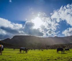 Pferdekoppel Mit Pferden Berge Und Sonne Im Hintergrund