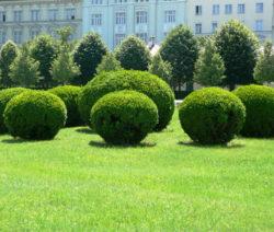 Rasen Mit Buchskugeln