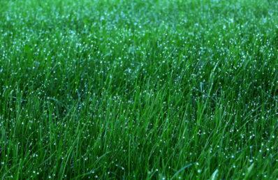 Rasen kostengünstig und ohne Umgraben erneuern? Das geht auch ohne Rollrasen!