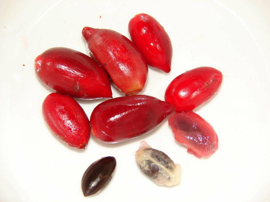Wunderbeeren und Samen