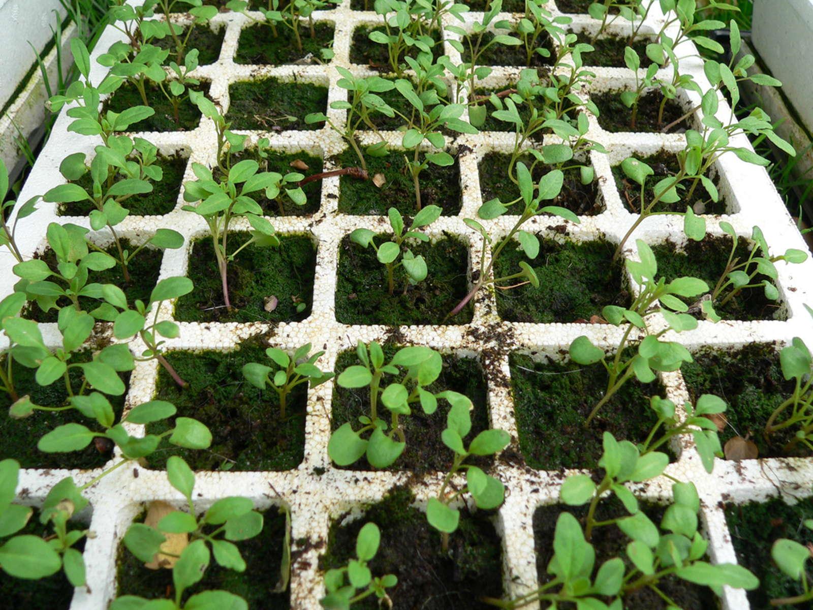 10 Krauter Selbst Vermehren Und Ganzjahrig Ernten Plantura