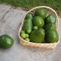 Frisch Geerntete Avocados Und Limetten In Korb