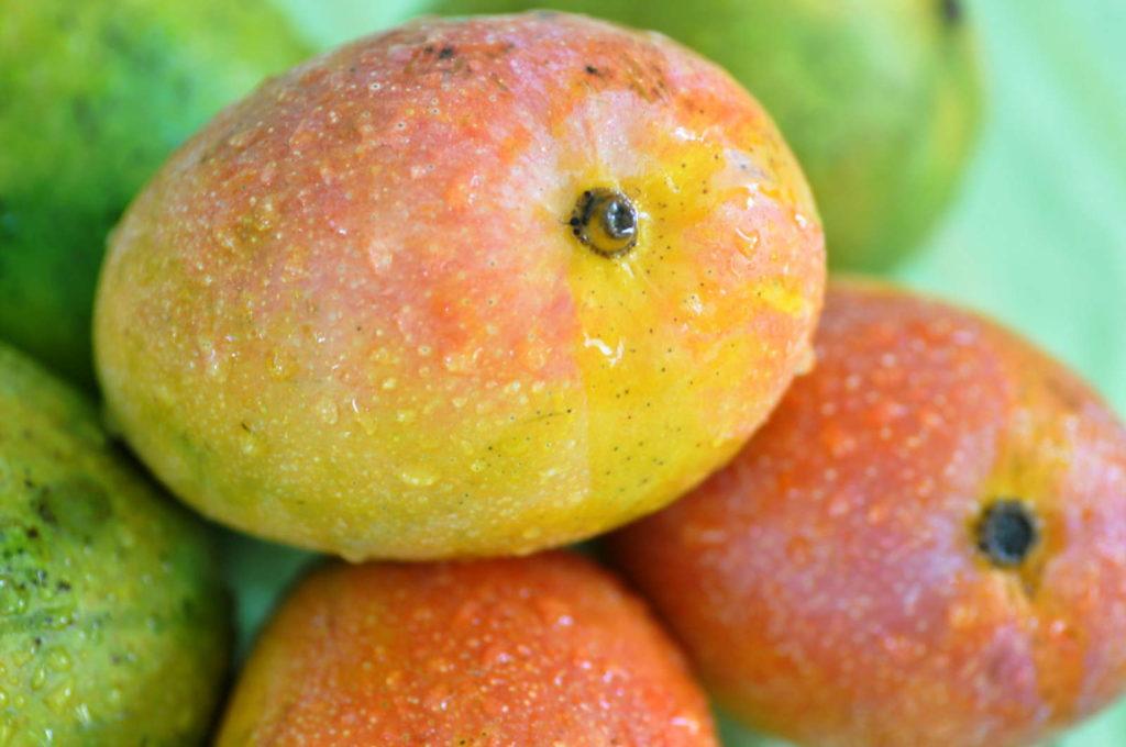 frisch geerntete Mango