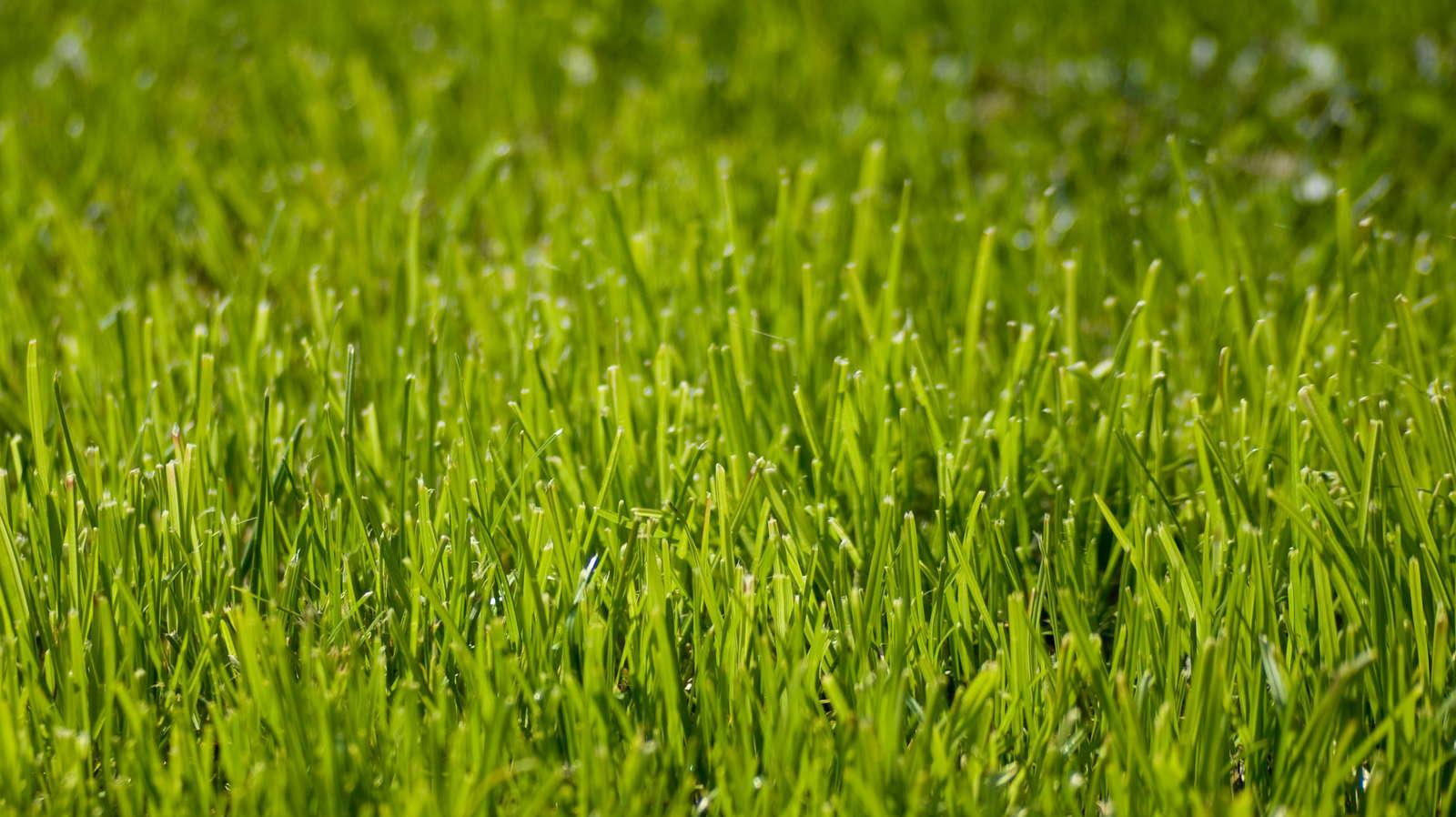 Rasensamen Test Tipps Zum Kaufen Von Rasensamen Plantura