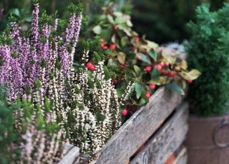 Pflanzen In Holzkiste In Winter