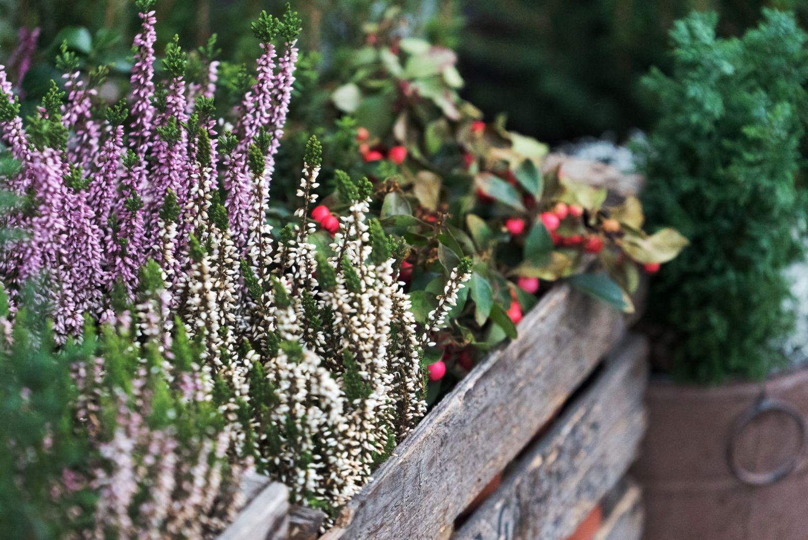Winterharte Kübelpflanzen Unsere Top 15 Plantura