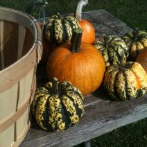 Verschiedene Kürbissorten Im Herbst