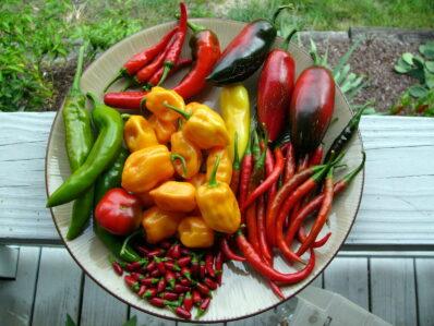 Chilisorten im Überblick: Milde & feurig-scharfe Sorten
