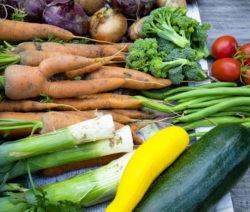 Ernte Zucchini, Lauch, Karotten, Zwiebeln, Tomaten, Brokkoli