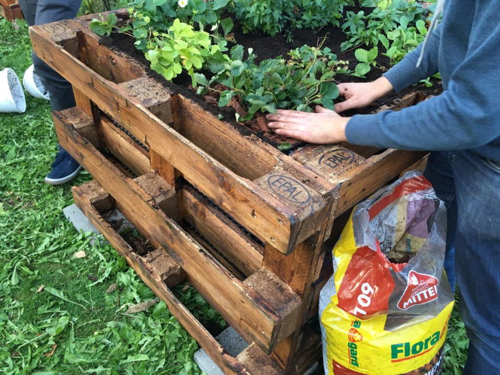 Hochbeet wird bepflanzt