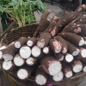 Maniok: Die Kartoffel Der Tropen