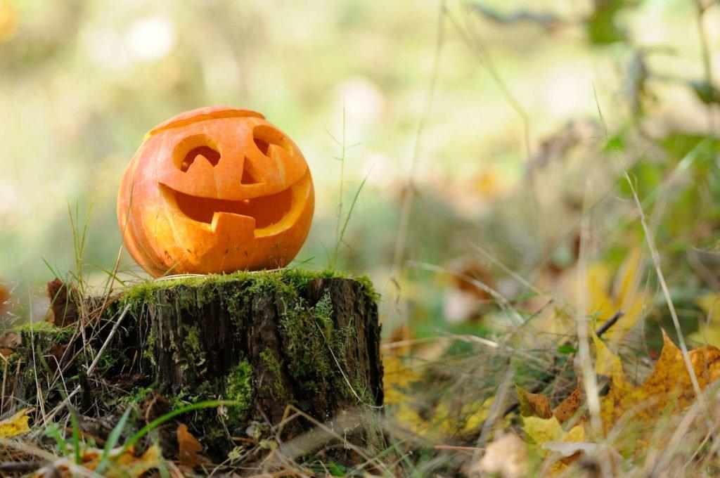 Kürbis im Wald mit lächelndem Gesicht