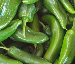 Jalapeno Grün Ernte