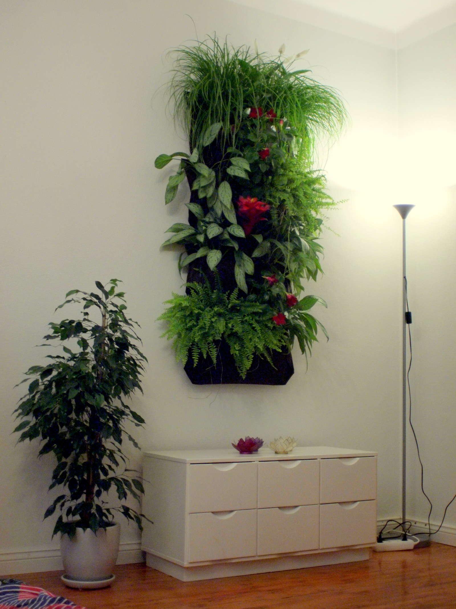 Vertikal Gärten vertikaler garten gärten bis in luftige höhen anlegen plantura