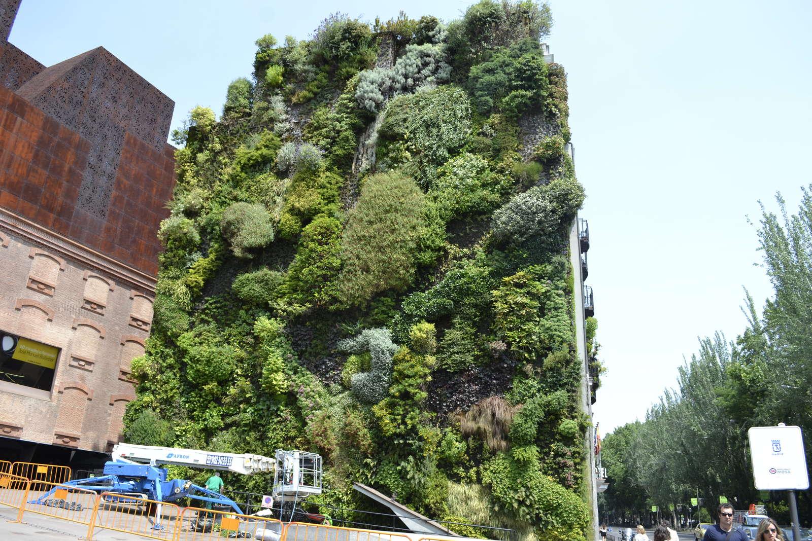vertikaler garten: gärten bis in luftige höhen anlegen - plantura