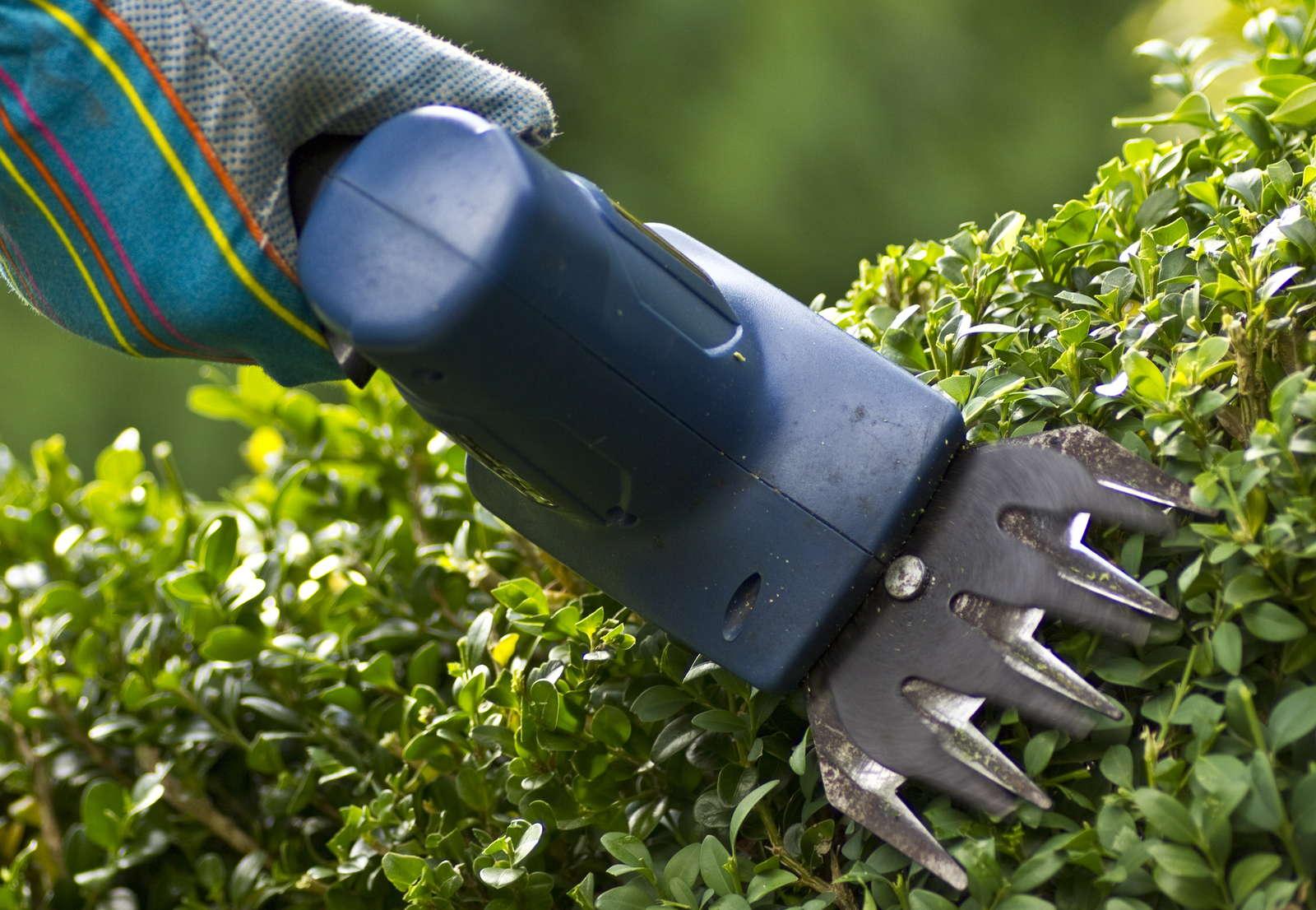 Buchsbaum schneiden zeitpunkt hilfsmittel formen for Potatura margherite