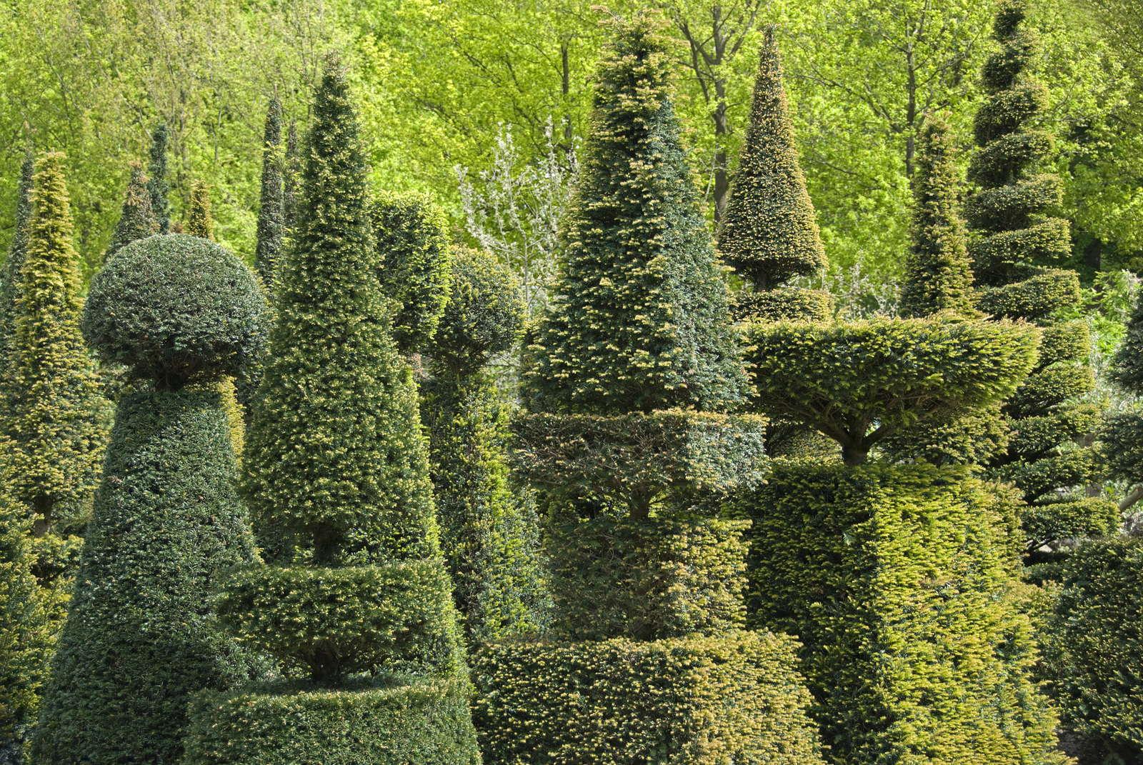 Gut Buchsbaum Formschnitt