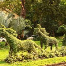 Buchsbaum Tiere