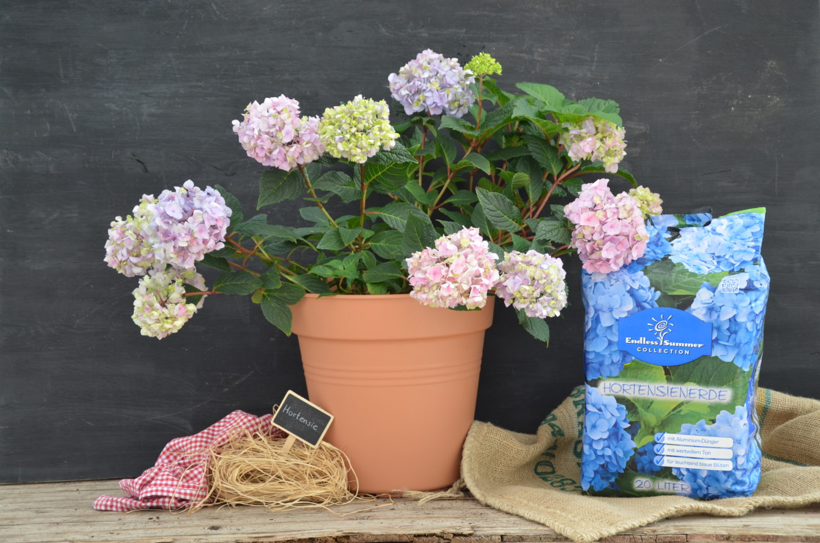hortensien pflanzen standort umpflanzen begleitpflanzen plantura. Black Bedroom Furniture Sets. Home Design Ideas