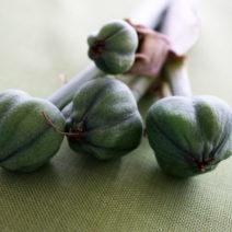 Frucht Mit Samen Amaryllis
