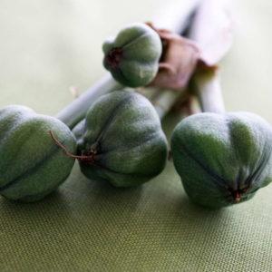 amaryllis pflege gie en und d ngen in der bl tezeit plantura. Black Bedroom Furniture Sets. Home Design Ideas