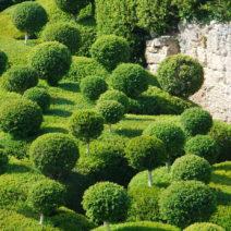 Kugelstämmchen Buchsbaum In Form Geschnittene Buchsbäume