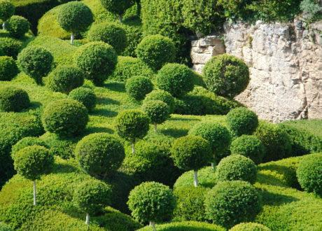 Buchsbaum Schneiden: Zeitpunkt, Hilfsmittel & Formen