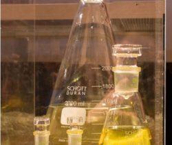 Urin In Erlenmeyerkolben
