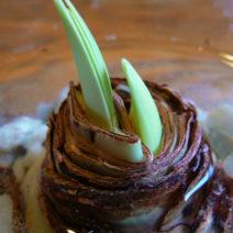 Austreibende Zwiebel Amaryllis