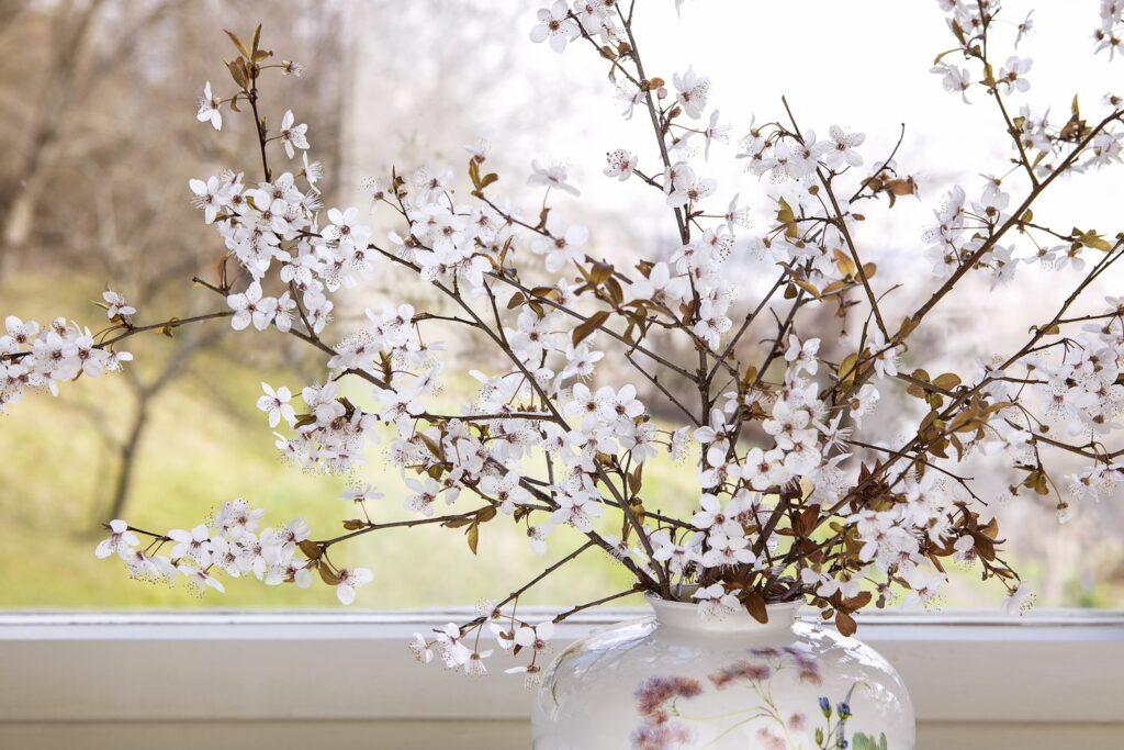 blühende Zweige auf dem Fensterbrett