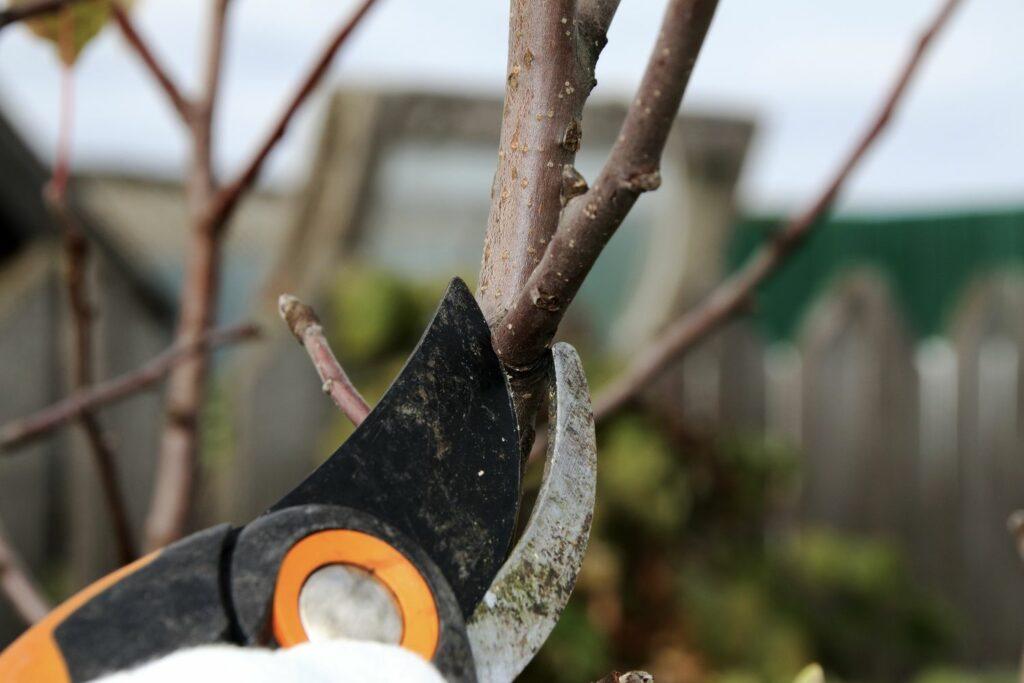 Zweig wird mit einer Gartenschere geschnitten