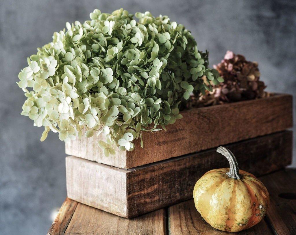 Getrocknete Hortensien neben einem Kürbis