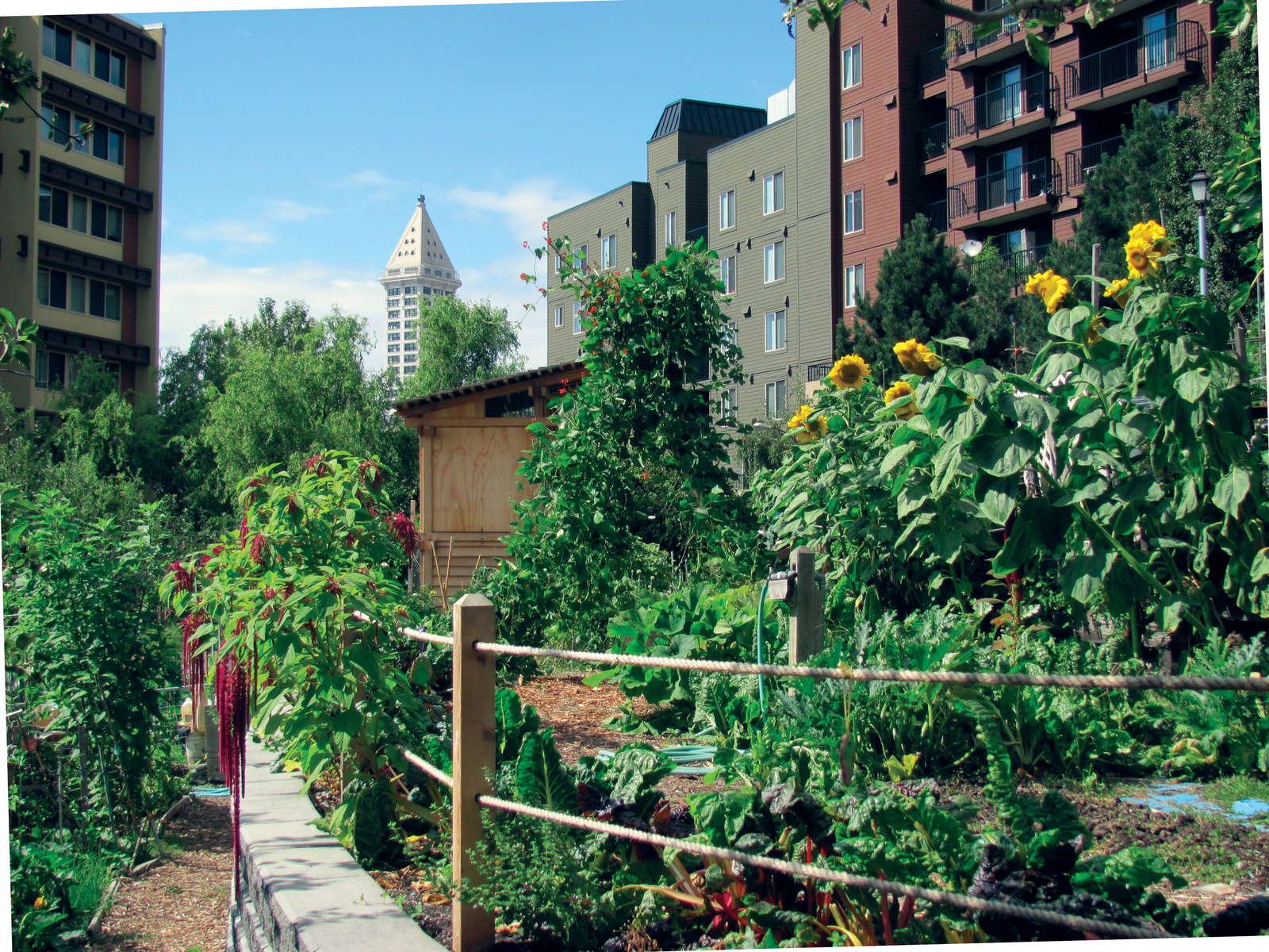 urbane landwirtschaft definition beispiele in. Black Bedroom Furniture Sets. Home Design Ideas
