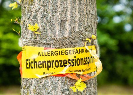Warnung Vor Eichenprozessionsspinner An Baumstamm Angebracht