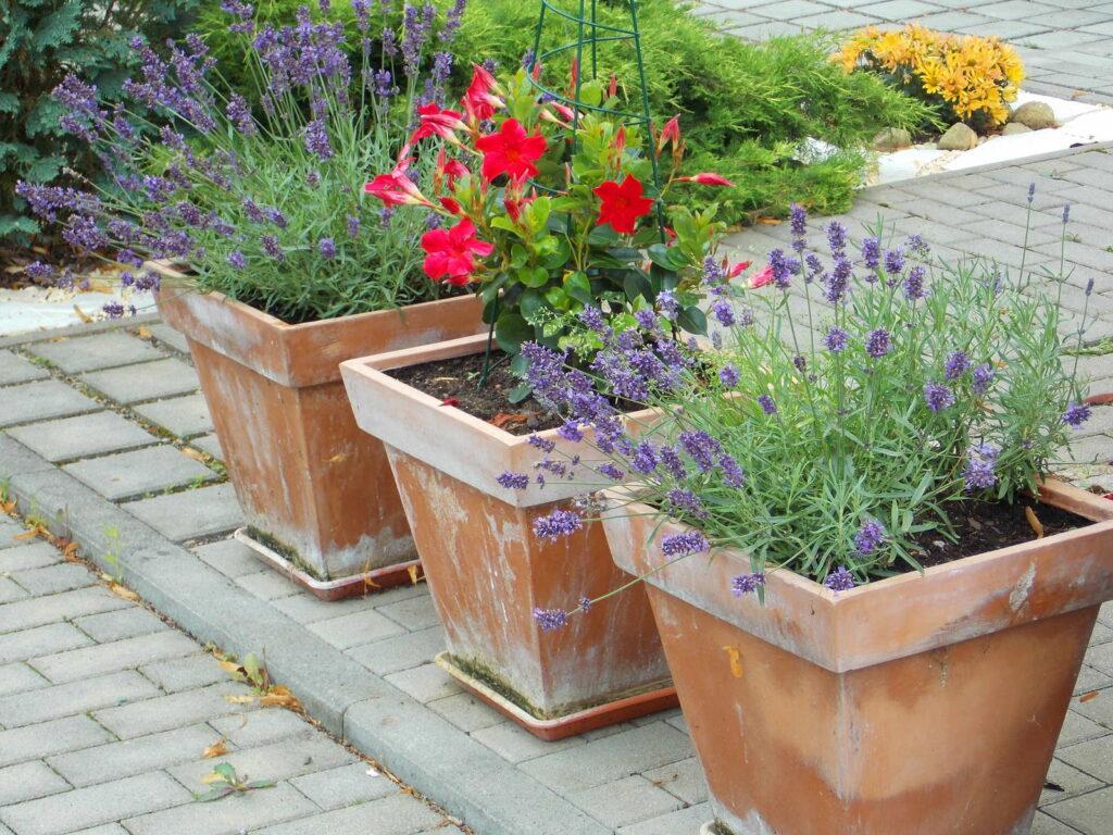 Umtopfen mehr raum f r geliebte pflanzen plantura for Raum pflanzen