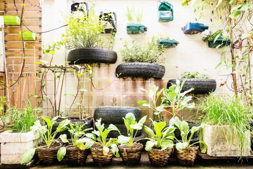 Pflanzen an Wänden