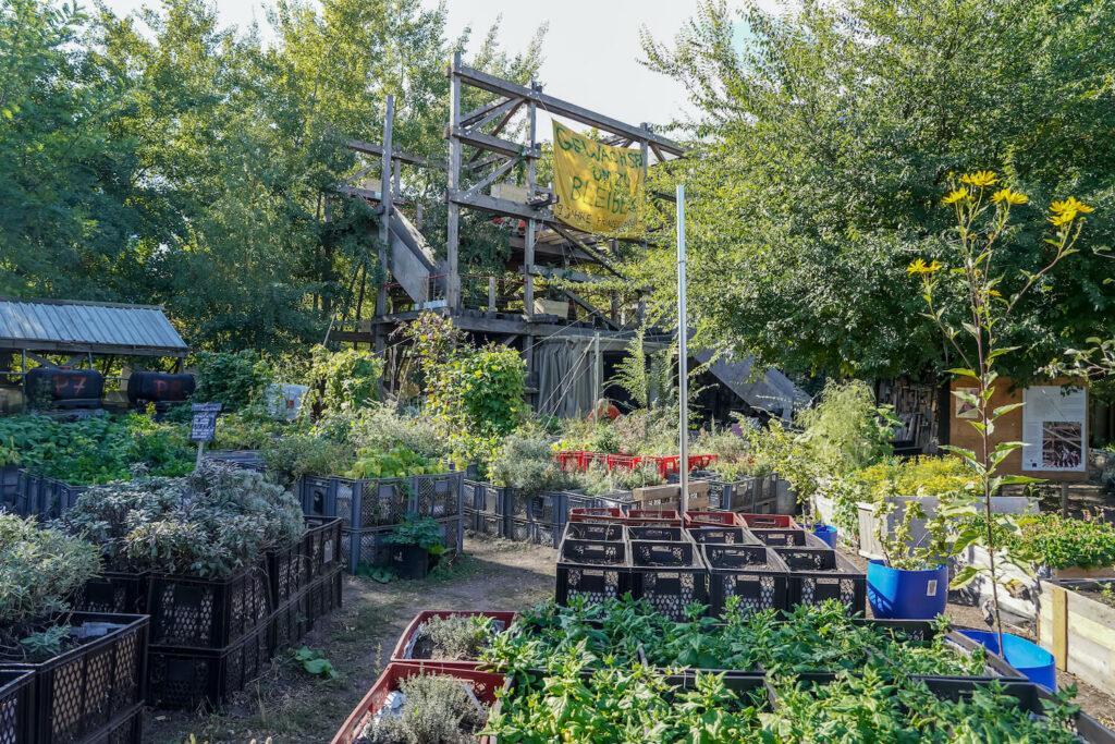 Urban Gardening im Prinzessinengarten