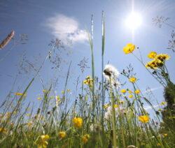 Gräser In Sonne