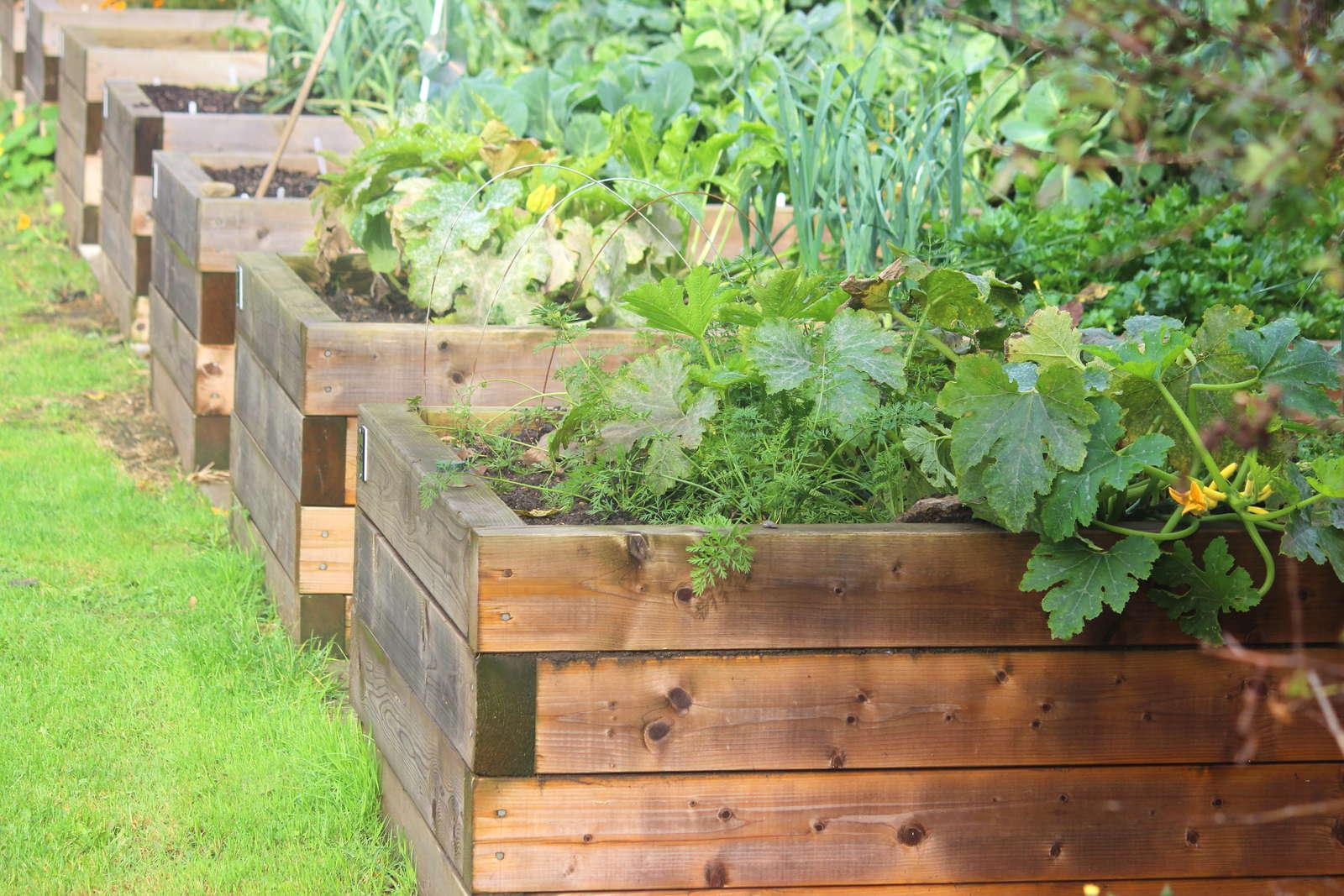 Hochbeet Selber Bauen Vs Hochbeet Kaufen Plantura