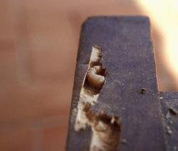 Holzwurm Erkennen 12
