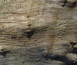 Holzwurm Erkennen 2