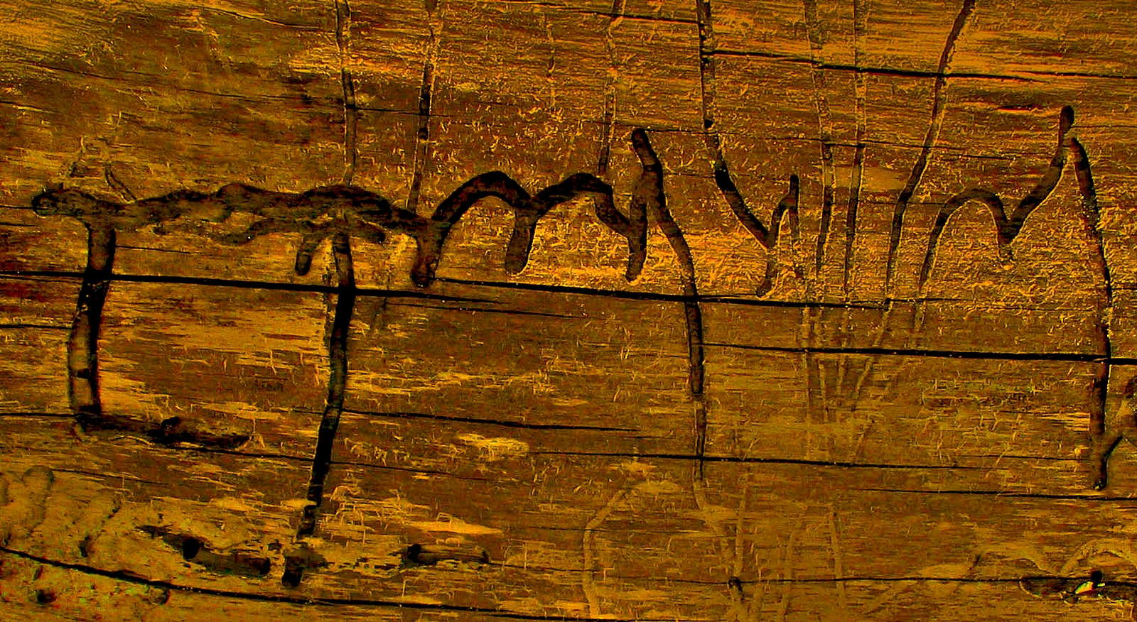 Holzwurmer Erkennen Vorbeugen Bekampfen Plantura