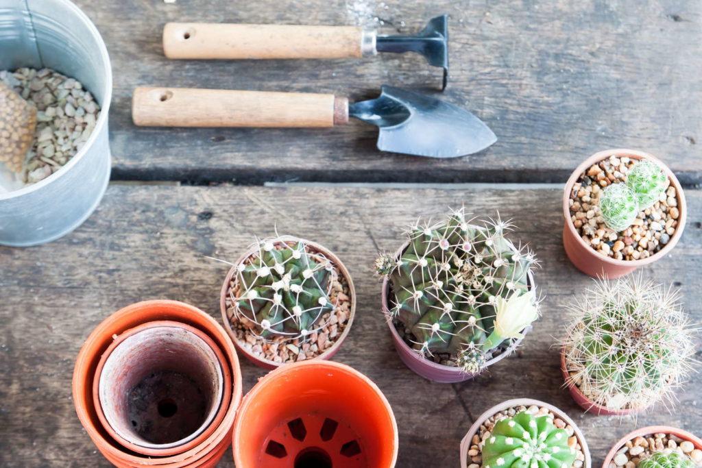 Kaktus umtopfen schaufel harke und töpfe