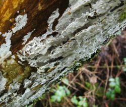 Kalkanstrich Rinde Weiße Farbe An Bäumen