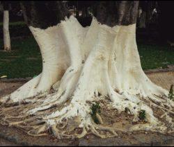 Kalkanstrich An Bäumen Weiße Farbe