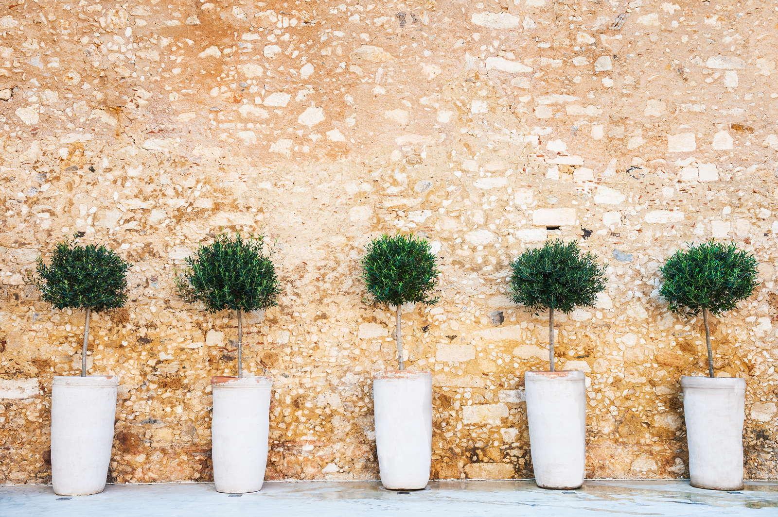 Berühmt Olivenbaum im Topf: 6 Tipps und Tricks vom Experten - Plantura #WV_85