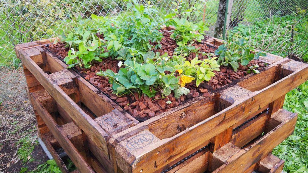 Hochbeet aus Paletten bepflanzt