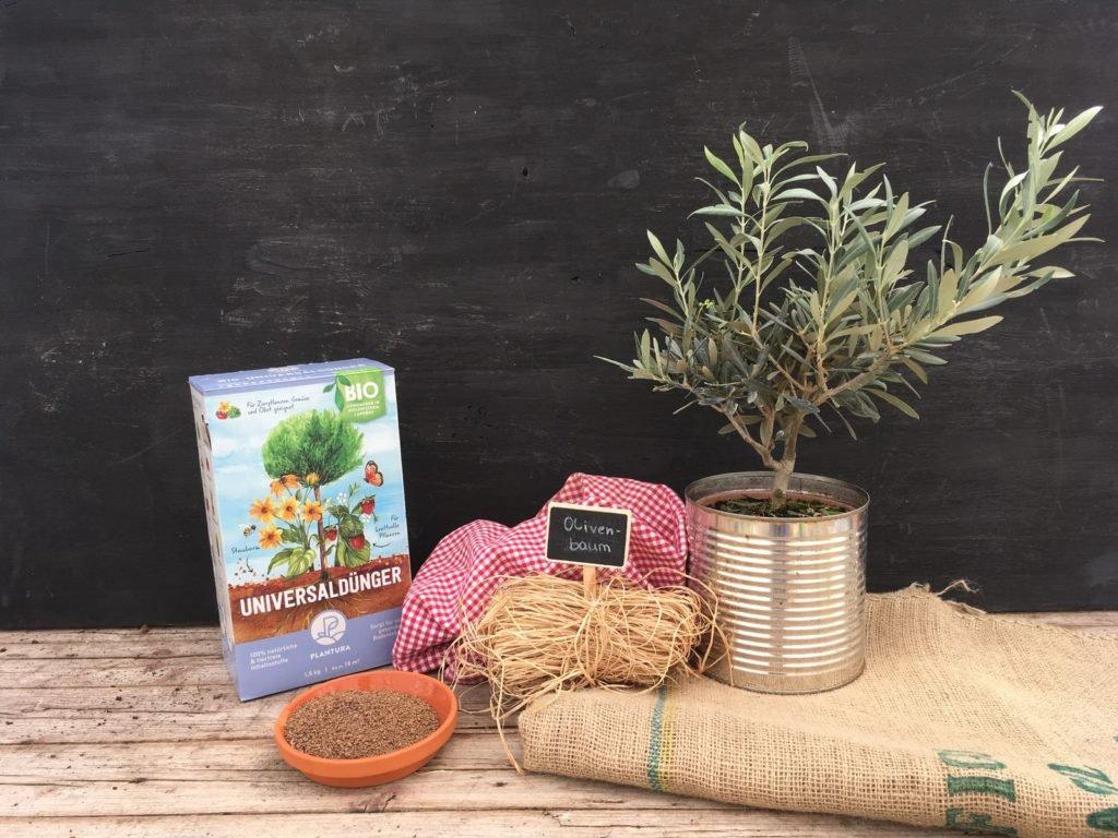 Olivenbaum und Plantura Bio-Universaldünger