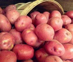 Rote Kartoffeln Im Korb